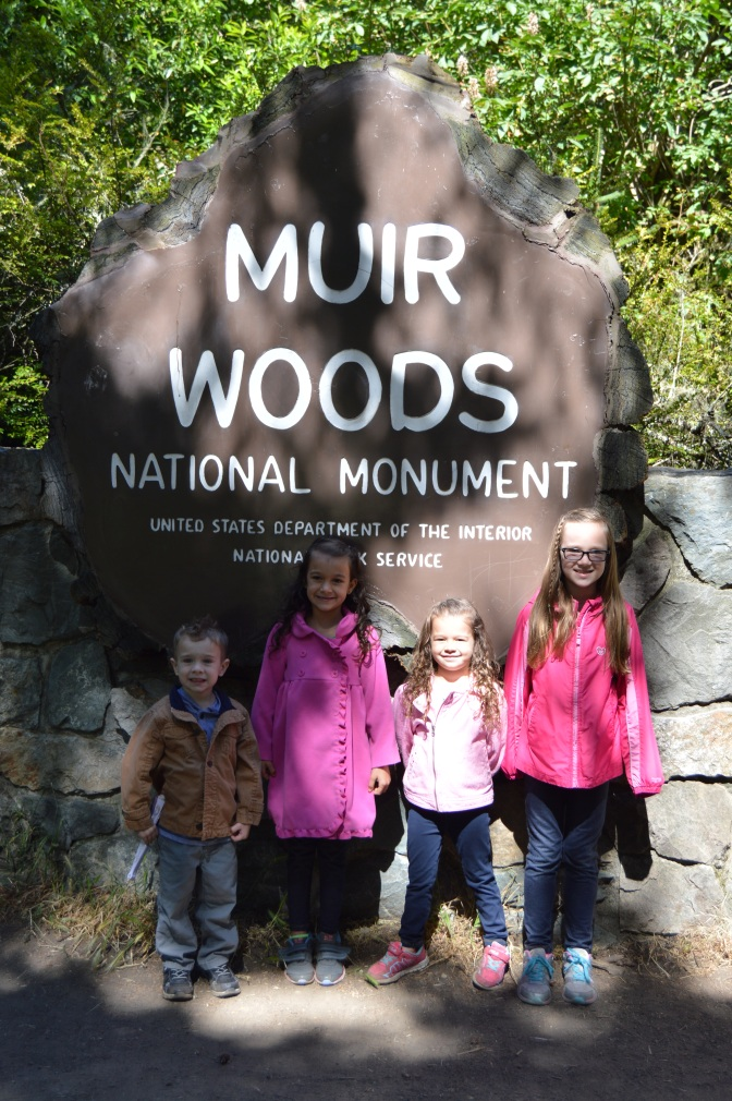 muir_woods_4kids