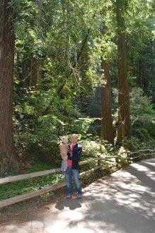 muir_woods_weston