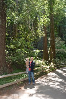 muir_woods_weston