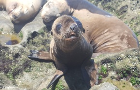 A baby sea lion!