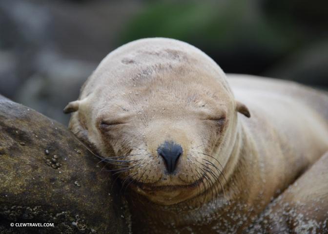 la_jolla_cove_sea_lion_sleeping