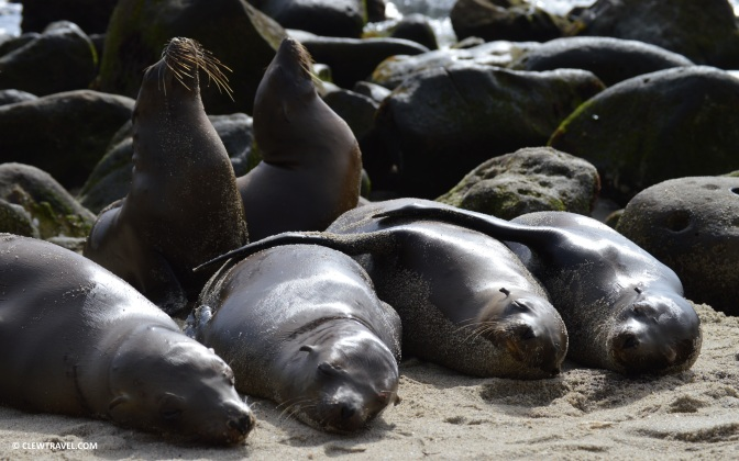 la_jolla_cove_sea_lion_sleeping_buddies