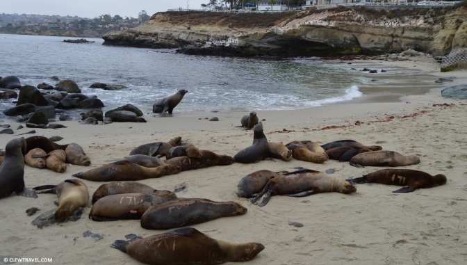 la_jolla_cove_sea_lions