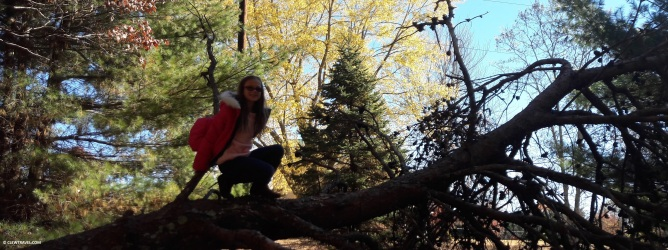 Emily climbing a tree on the property