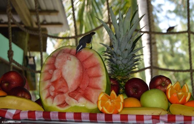 fruit_display_bird
