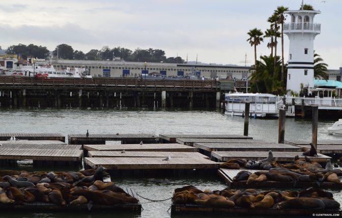 pier39_sea_lions.jpg